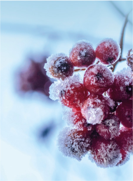 visuel-alaune-hivers